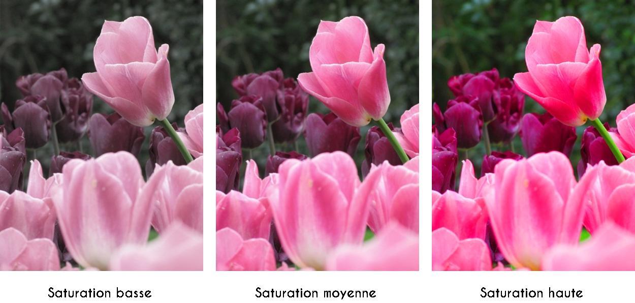 Degré de saturation